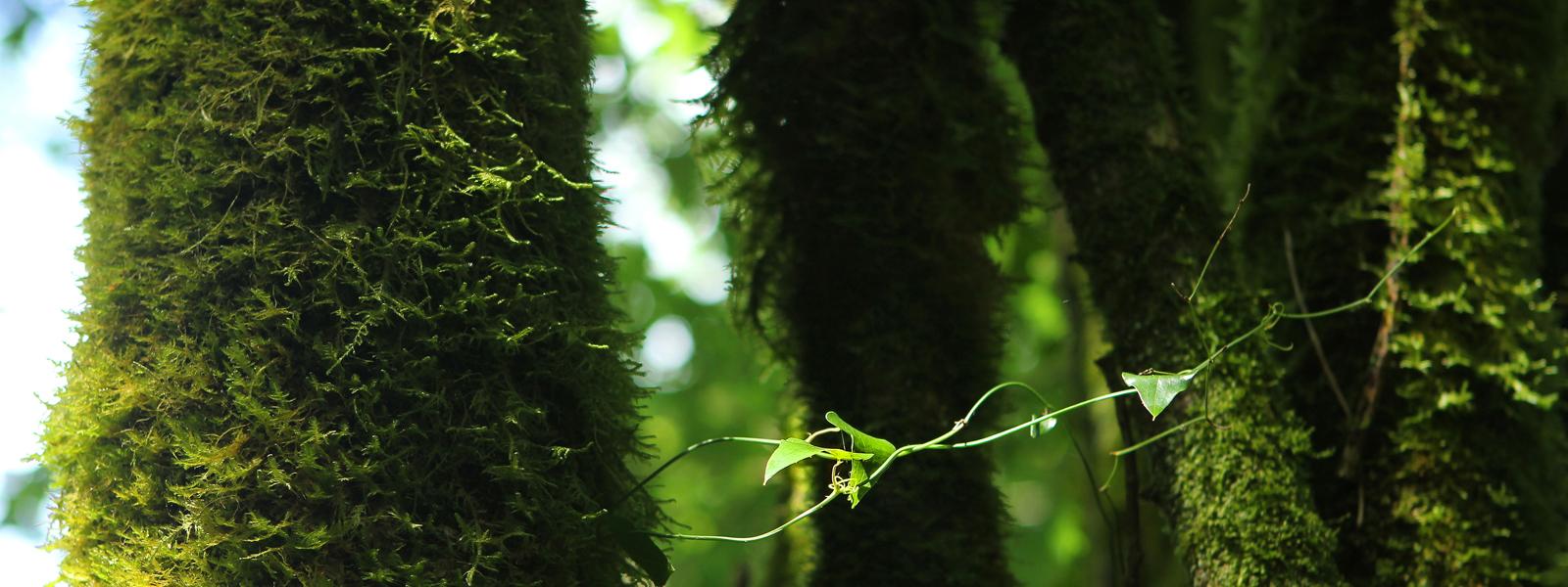 Basque Green Spirit