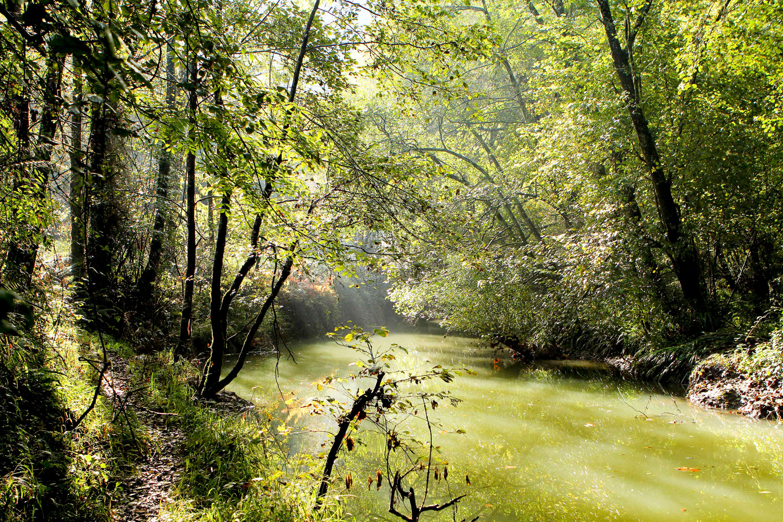 Bosques de ribera, aliado del río